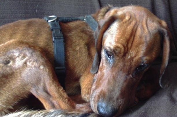 gerettet durch Pflegestelle für Hunde