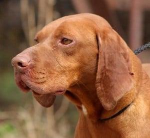 Pflegestelle für Hunde