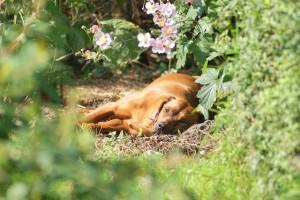 Tierschutzhund