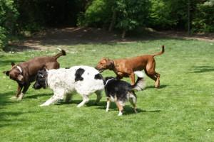 Laute der Hunde