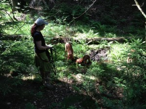 Fehler vermeiden in der Hundeerziehung