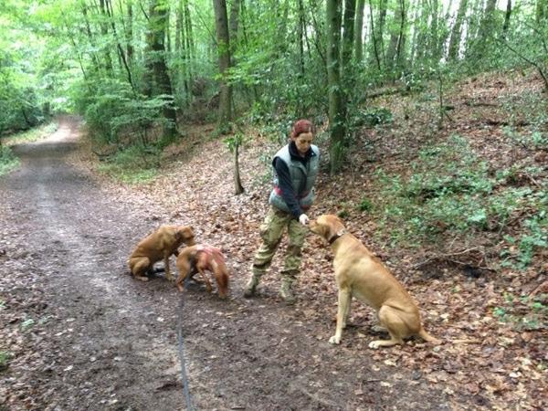 Fotos mit unseren Hunden