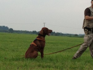 Wie lernt ein Hund