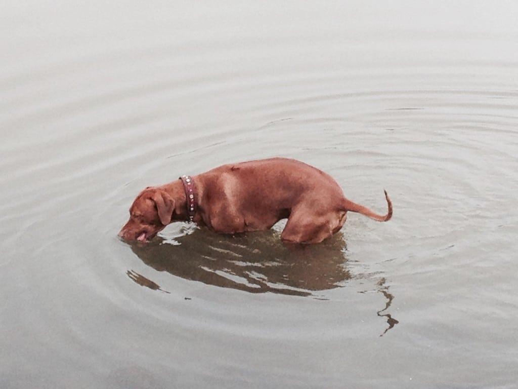 Tango im Wasser