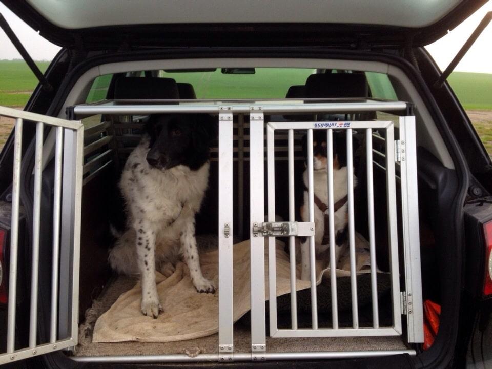 Hunde in Transportbox