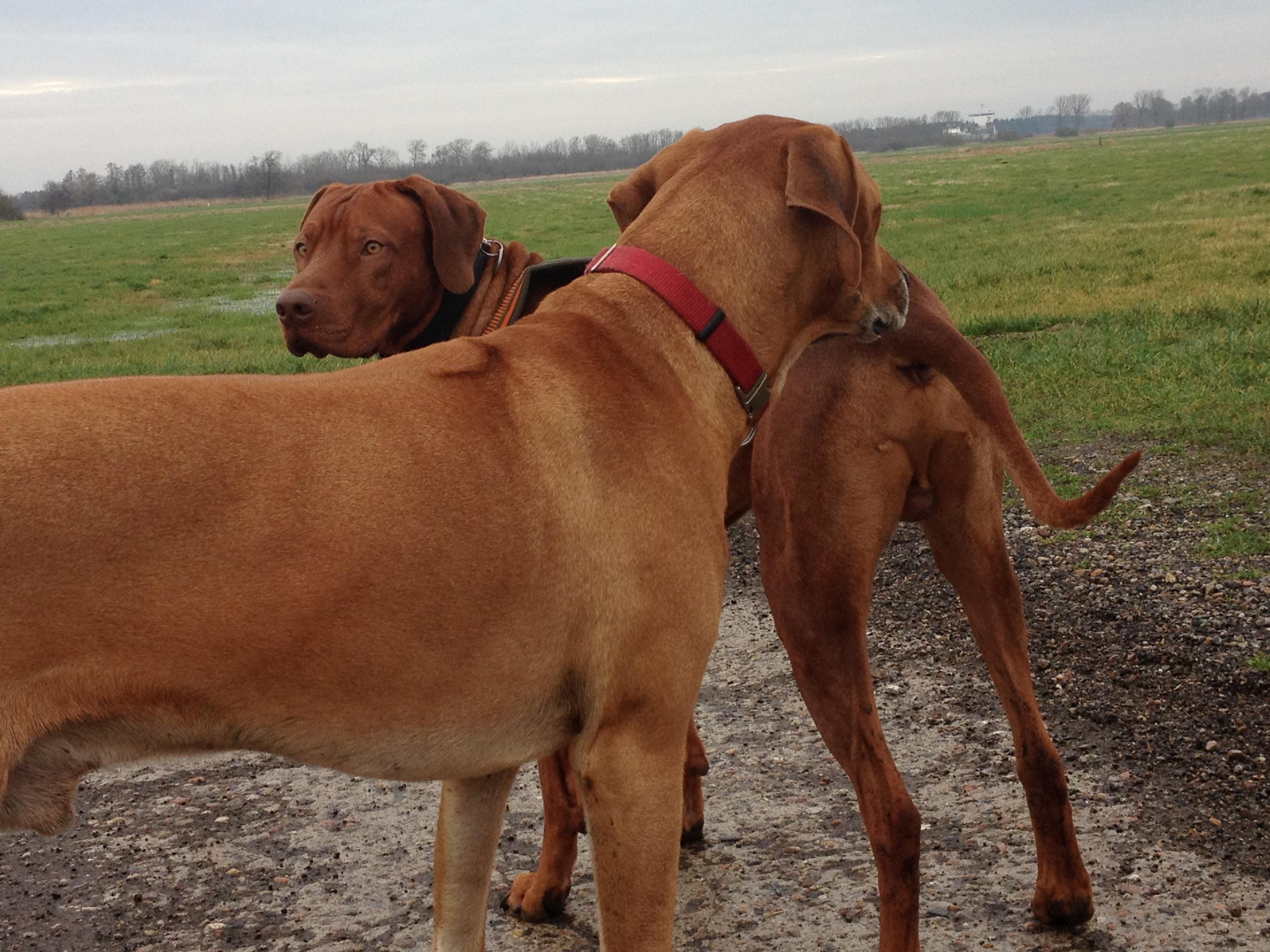 mammatumor hund einschläfern