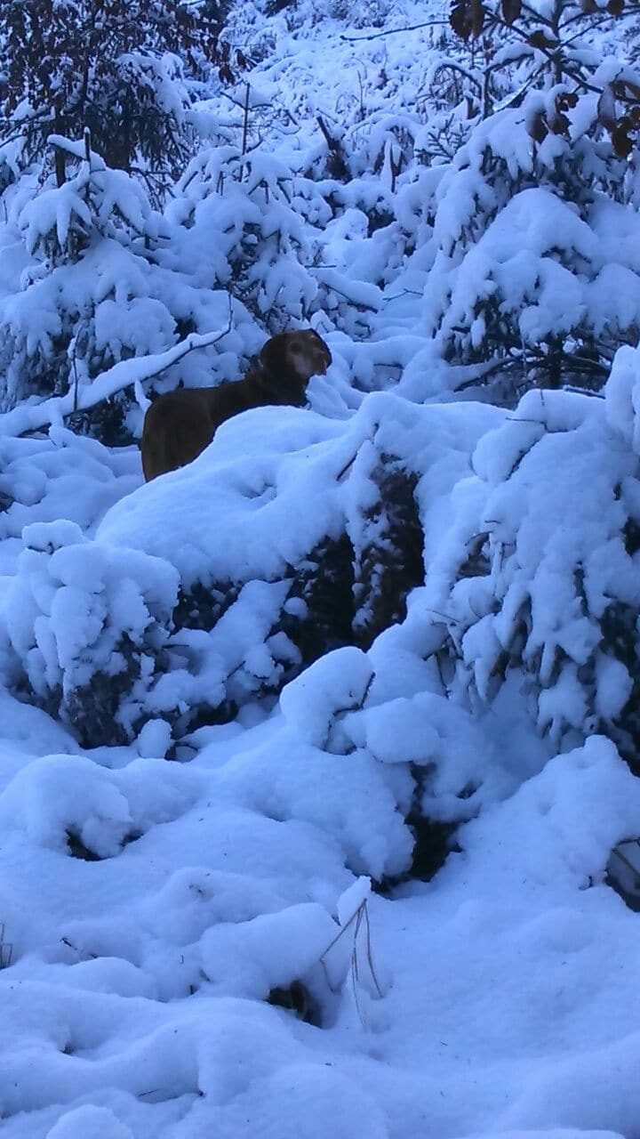 Maya im Schnee
