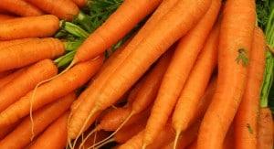 Karotten spülen Würmer raus.