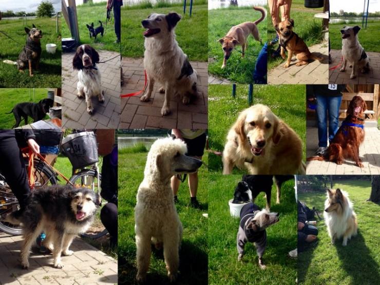 So viele unterschiedliche Hunde. Eine kleine Auswahl ...