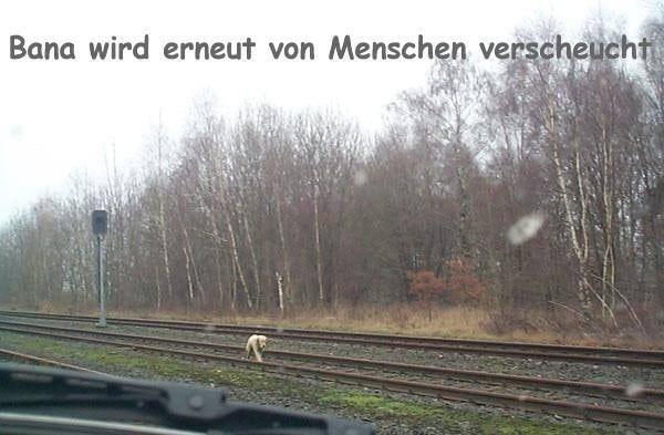 """Umherirrend in der Fremde """"Deutschland"""" Foto: Regina Buchhop"""