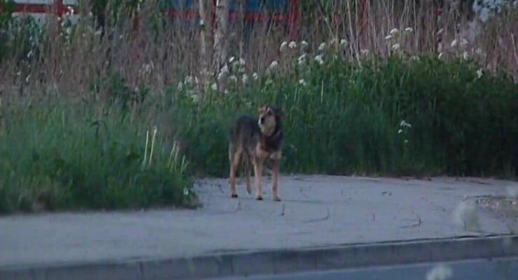 Entlaufender Hund