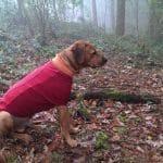 Hundemäntel können sehr wichtig sein