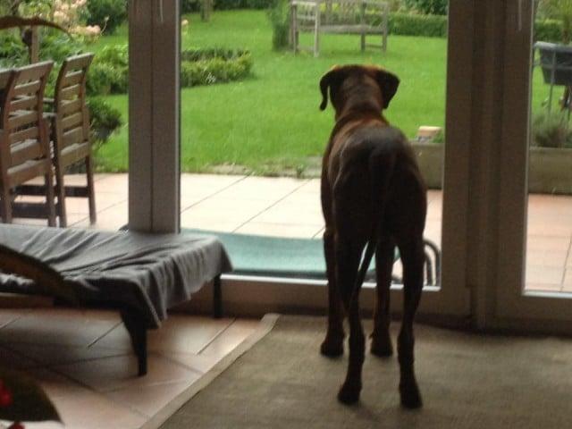 Typ B Hunde: Beobachter, Denker, Wächter - Wissen-Hund.de