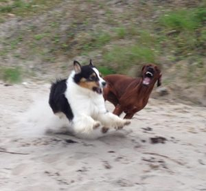 Probleme mit anderen Hunden
