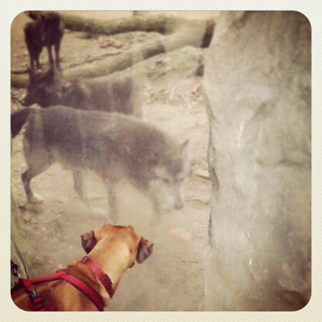 Hunde im Zoo