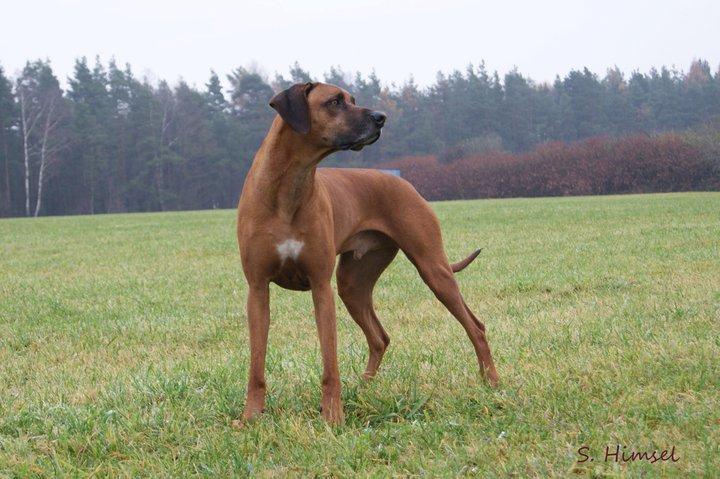 Rutenstellung Hund