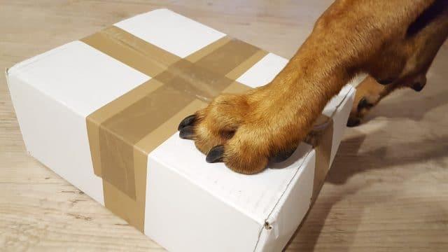 Im Produkttest - der Kevin Jumper - Wissen-Hund.de