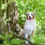 Relaxed Dog Kurs – Erfahrungsbericht