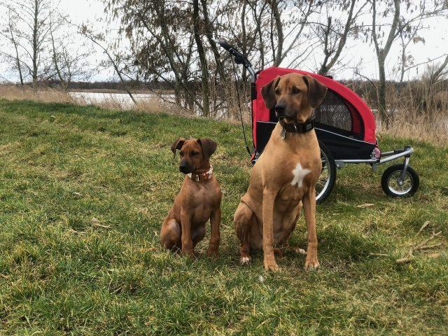 Streberhunde, Spezialangebot