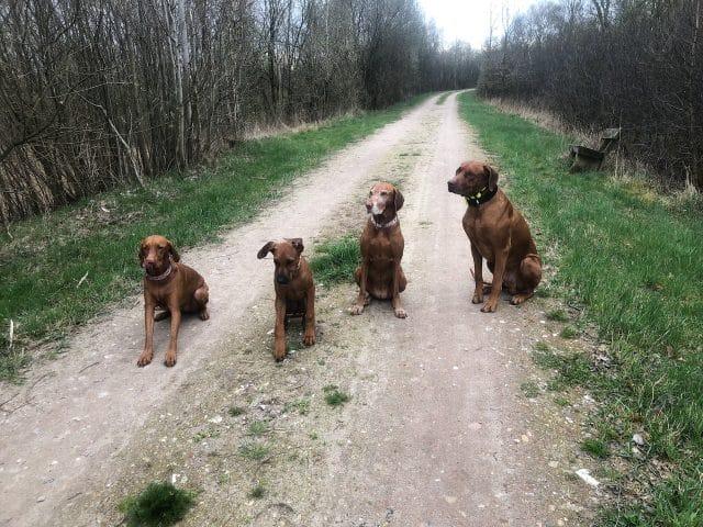 Streberhunde