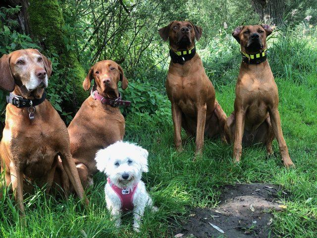 Hundetraining, Spezialangebot